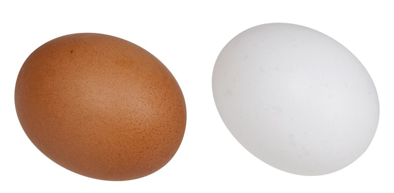 A brown and white chicken egg by Even-Amos