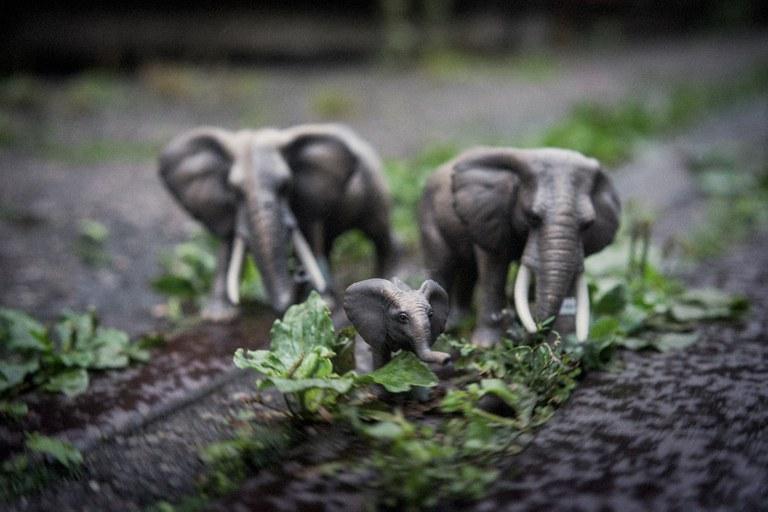 Elefanten — Michel Gilgen, Urban Jungle