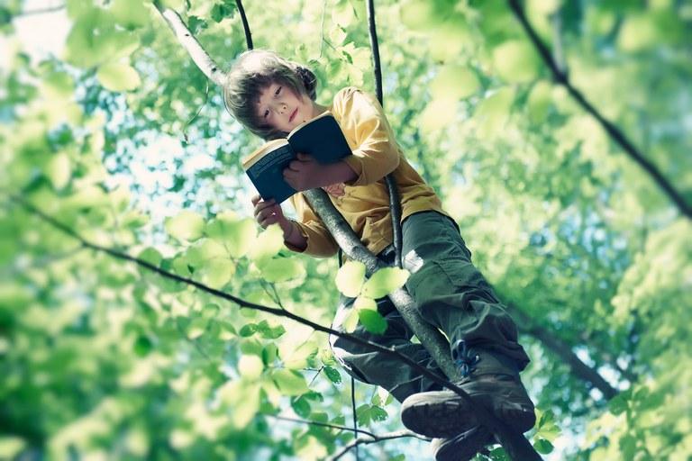 Lesen auf dem Baum