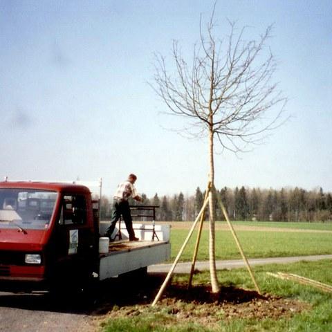 Baumpflanzen 3