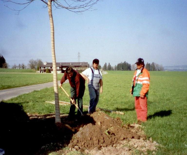 Baumpflanzen 1