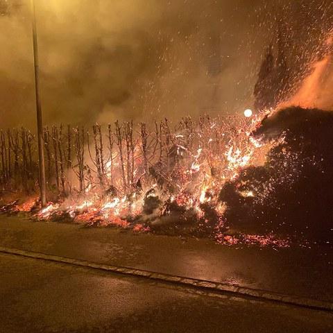 Heckenbrand Bild 1