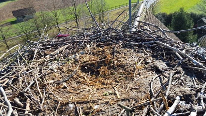 Das Nest von oben