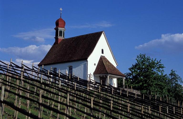 Kirchen in Hünenberg - Weinreben