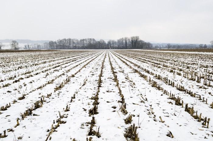 Landwirtschaft beim Bützen