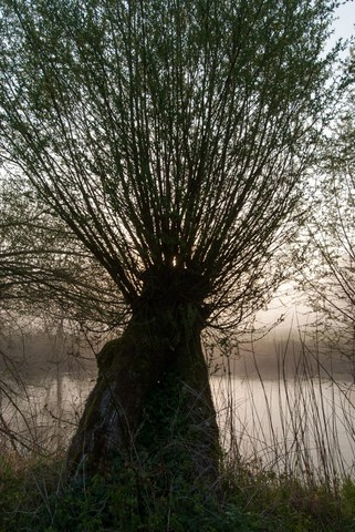 Bild Natur, Baum
