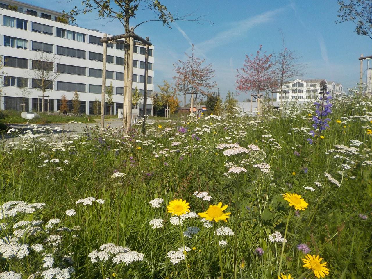 Erlenpark Rotkreuz