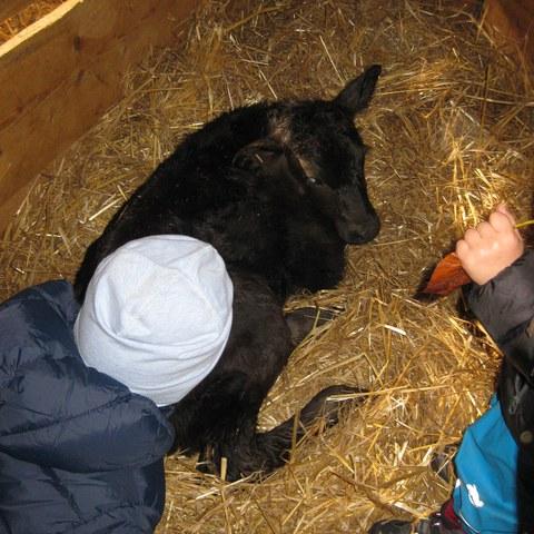 Besuch beim Bauernhof.JPG