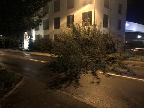 Baum auf der Bahnhofstrasse