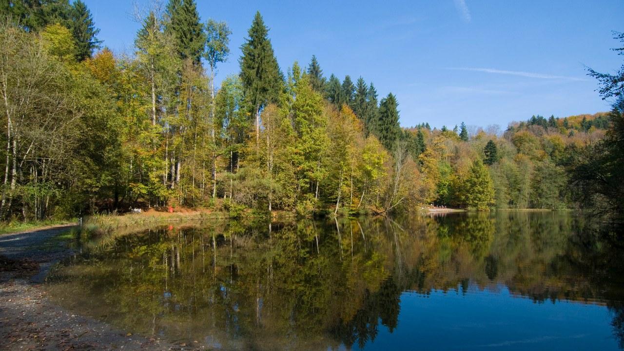 Wald Steinhausen
