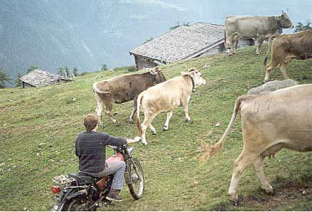 Motorrad auf Alp Richinen (VS)